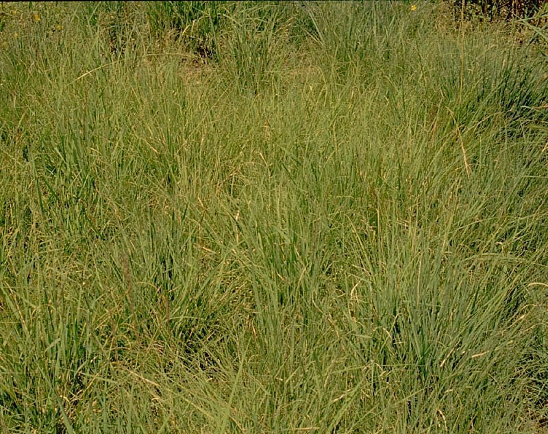 Dryland Shortgrass Pollinator for 400 ft