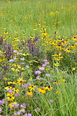 Mesic Pollinator Mix for 500 ft