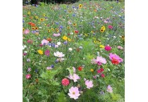 Native Grass & Wildflower Seed Mixes